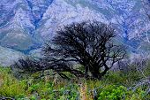picture of fynbos  - black green mountain flowers tree dead grass - JPG