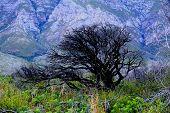 picture of fynbos  - black green mountain flowers tree dead grass - JPG