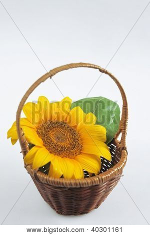 yellow sunflower with green leaf in wooden woven basket