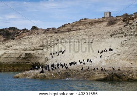 Flock Of Cormorants And One Lonely Sea Lion