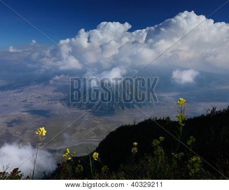Green meadow with flowers and volcanoes on the background. Bromo Tengger Semeru National Park, Indonesia