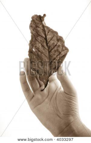 Holding Antique Leaf