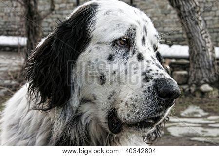 Cabeza de perro enorme