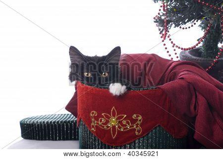 Black And White Christmas Kitty In A Velvet Box