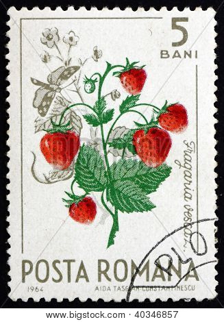 Postage stamp Romania 1964 Wild Strawberries, Fragaria Vesca