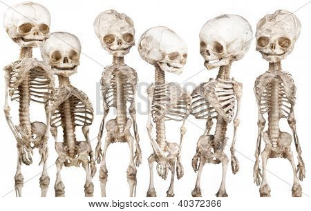 Many children's human medical skeleton over white