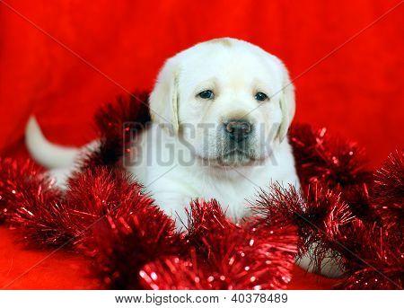 Amarelo brinquedos cachorro Labrador com ano novo (Natal)