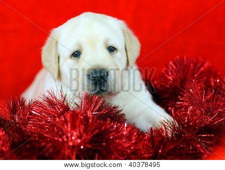 Brinquedos de presente amarelo Labrador filhote com ano novo (Natal)