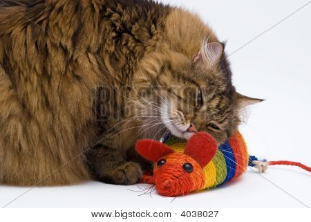 Cat Embraces The Mouse On White Background