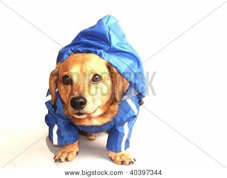 Rain Dog