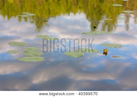 Yellow Flower In A Forest Lake