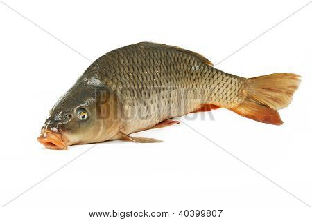 Carp Is Traditional Czech Christmas Food. Carp Has Tasty Dietary Meat.