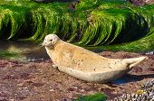 Seal on a rock surrounded by water. San Diego California Coast Line, La Jolla Shores in San Diego, C