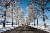 pic of snowy-road  - Thy symmetry empty road through trees in winter - JPG