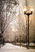 stock photo of snowy-road  - winter street light among snowy frozen tree branches - JPG