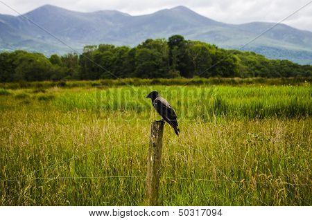blackbird waiting