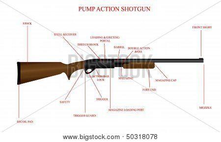 Labeled Shotgun Diagram