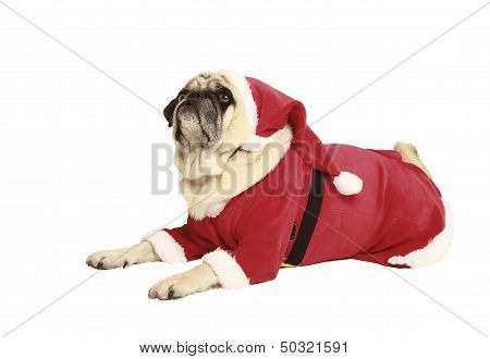 Pug In Santa Costume Lying
