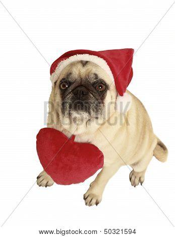 Pug Santa Claus Cap