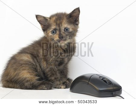 Kitty and computer mouse