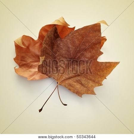picture of some dried autumn leaves on a beige background with a retro effect