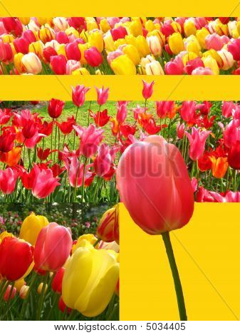 Tulip Collage Greeting Card
