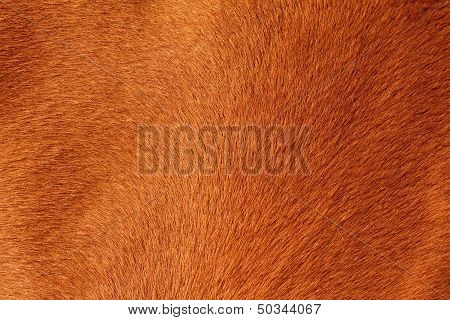 Textured Pelt Of A Brown Horse