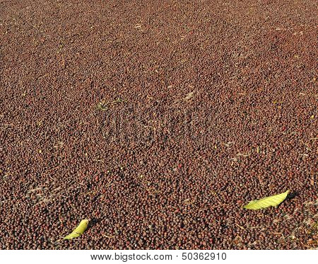 Drying The Coffee Beans