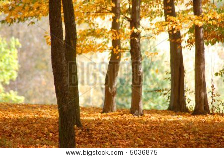 Forest And Garden With Golden Leaves At Fall