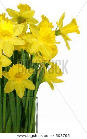 Narcisos en un florero de cristal cuadrado