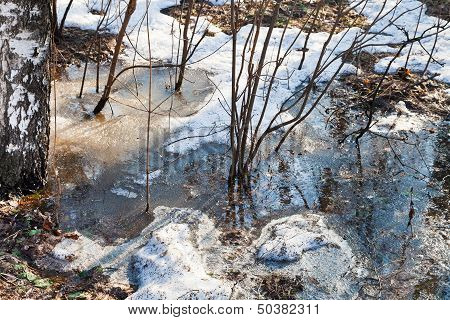 Bush In Puddle Of Melted Snow