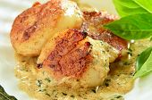 stock photo of scallop shell  - Seared scallops with creamy herb butter sauce in natural scallop shell - JPG