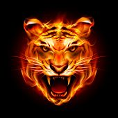 stock photo of tigers  - Head of a tiger in tongues of flame - JPG