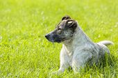 stock photo of stray dog  - Stray dog resting on the lawn and keeping warm in the sunlight - JPG