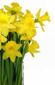picture of flower vase  - daffodils in a vase isolated on white - JPG