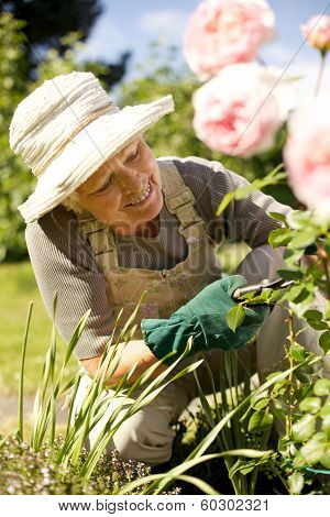 Senior Woman Fixing Up Her Garden