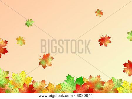 autumn maple leaves made in illustrator cs4