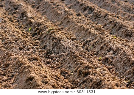 Arable field