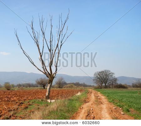 Dry Tree And Red Dirt