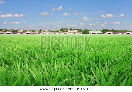 Farmland with spring wheat field