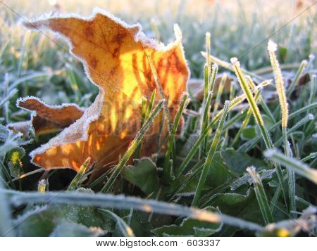 Frosty Yellow Leaf