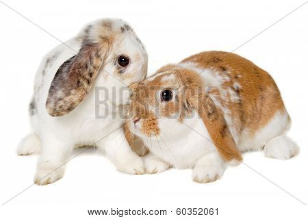 Two sweet rabbits is sitting on a white background