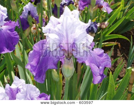 Purple And White Flower