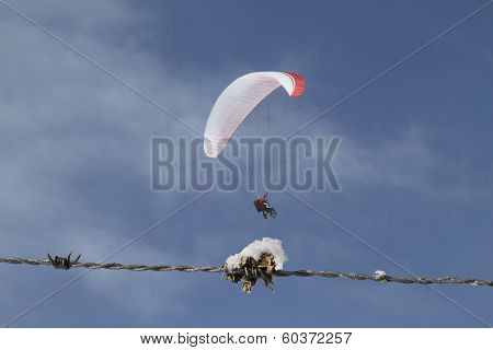 Barbed Wire With Paraglider