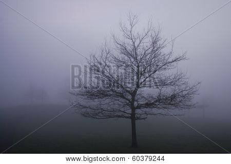Foggy Winter Scene With Leafless Tree