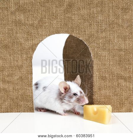 mouse coming out of it's hole