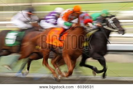 Field Of Racing Thoroughbred Horses