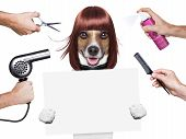 stock photo of hairspray  - hairdresser dog holding a white and blank placard - JPG