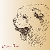 stock photo of chow-chow  - Chow - JPG