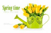stock photo of yellow buds  - Bunch yellow tulips in watering can - JPG
